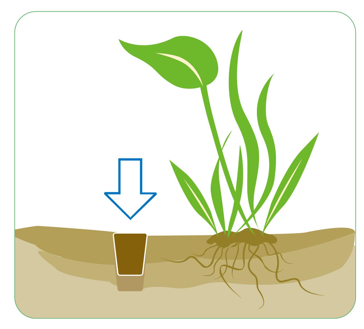 ISTA Water Plant Fertilizer Ball 2