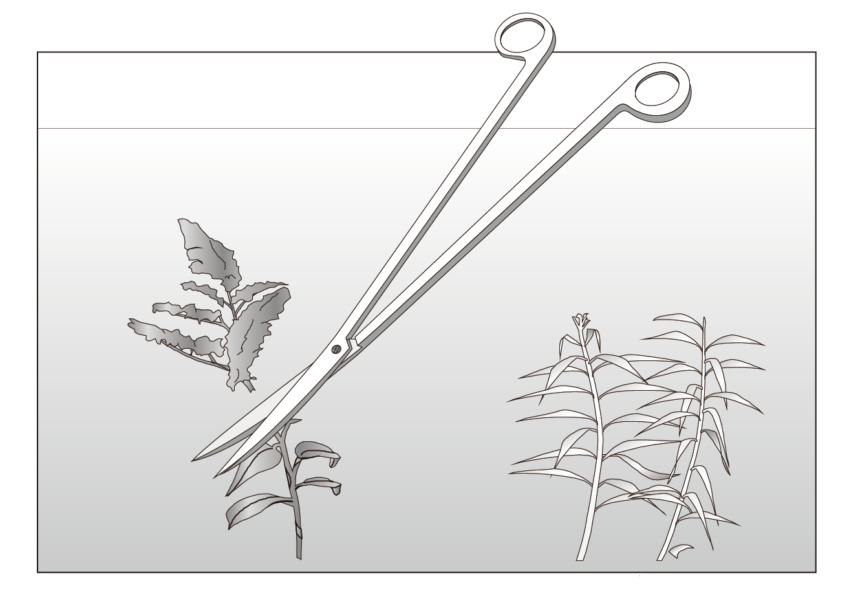 ISTA Pro Scissors Curve End 1
